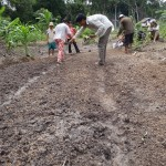 Picture of practicing of rice sowing