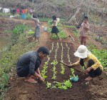 CRDT staff coaching farmers on vegetable growing