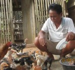 Model Farmer Mr. Kok Kon makes a good living raising chickens near his home.