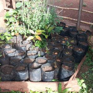 Tree Nursery for Reforestation and Food Security