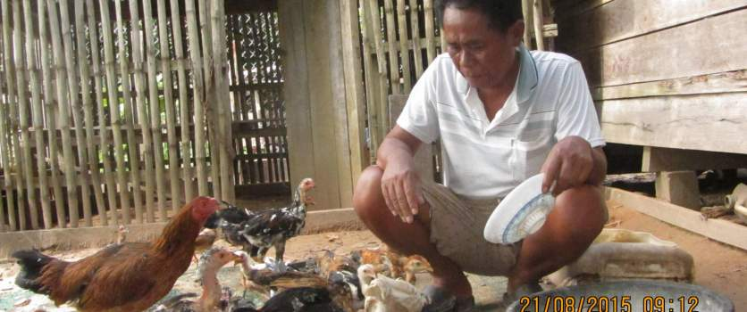 Sustainable occupations as alternatives to illegal logging and wildlife poaching